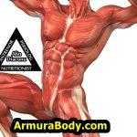 cresterea ,dezvoltarea, masei musculare, masa hipertofie ,dieta, proteine, suplimente ,antrenament ,exercitii, sala, gym, acasa ,muschi cum sa ,armurabody,