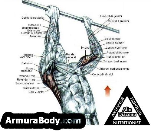 tractiuni corecte la ceafa cum sa  armura body antrenor personal online fitness
