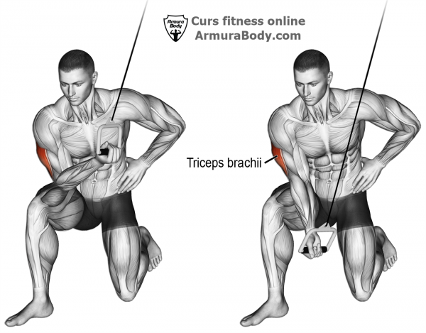 curs fitness instructor antrenor personal trainer antrenez corect biceps triceps antrenament exercitii brate