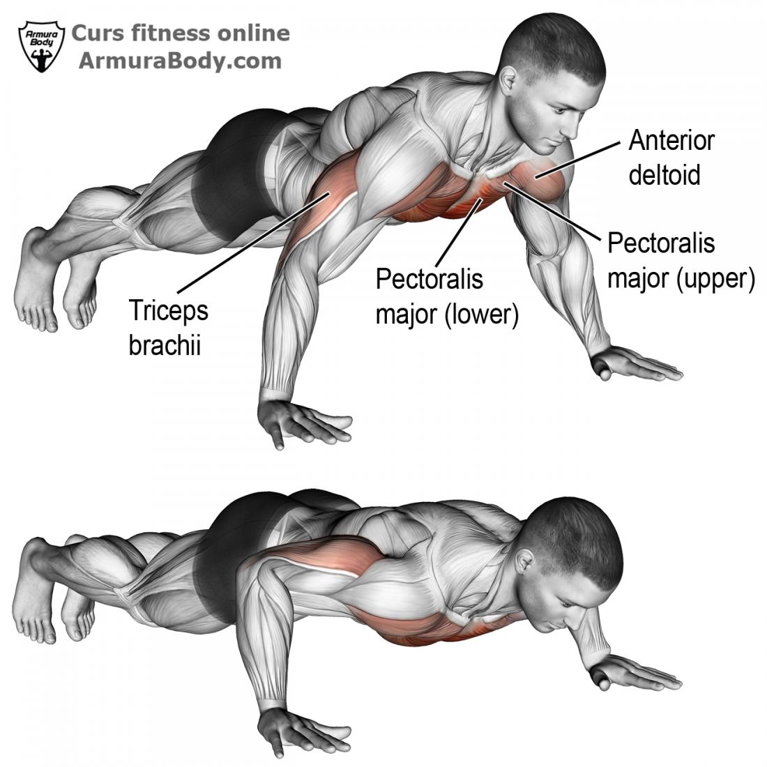 curs fitness instructor antrenor personal trainer antrenez corect piept pectorali exercitii pectorali exercitii piept