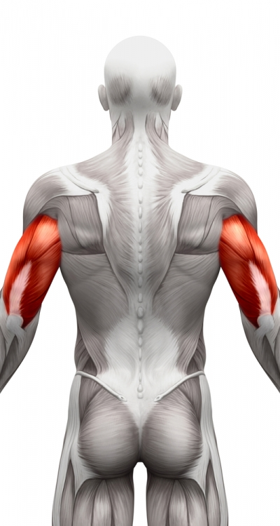 triceps1